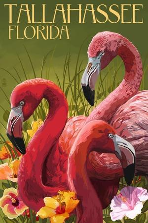 https://imgc.allpostersimages.com/img/posters/tallahassee-florida-flamingos_u-L-Q1GQLKK0.jpg?p=0