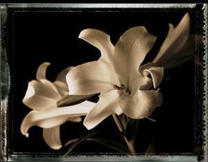 Bermuda Lilies by Talli Rosner-Kozuch