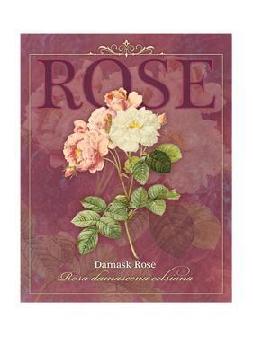 Damask Rose by Tammy Apple
