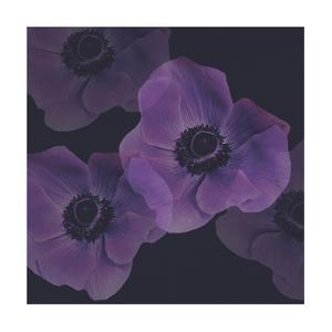 Purple Anemones I by Tammy Apple