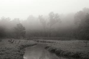 Creek in Fog I - BW by Tammy Putman