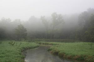 Creek in Fog I by Tammy Putman