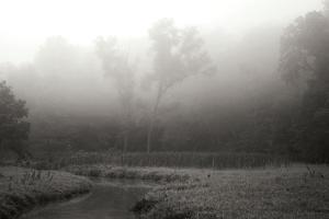 Creek in Fog II - BW by Tammy Putman