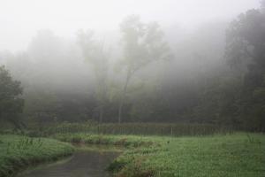 Creek in Fog II by Tammy Putman