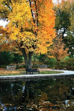 Fall in the Park by Tammy Putman