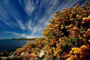 Spring near Puerto Varas by Tan Yilmaz