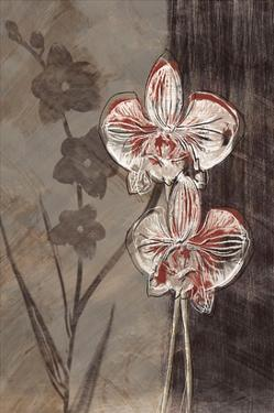 Orchid Sketch I by Tandi Venter