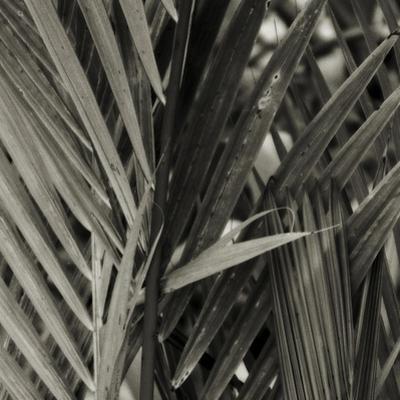 Bamboo Study I