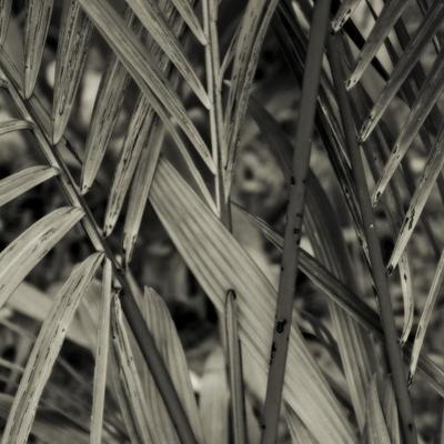 Bamboo Study II