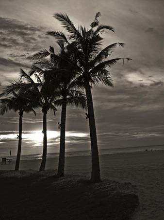 Palms at Night III