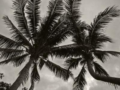 Palms at Night V