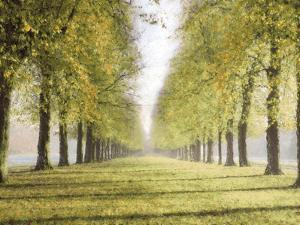 Avenue Des Arbres by Tania Bello