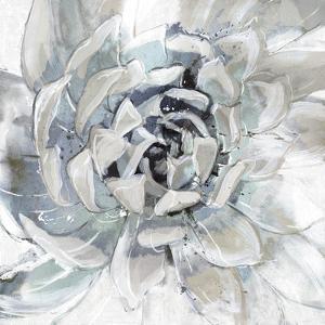 Cereus Aeonium by Tania Bello
