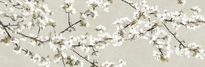 Confetti Blossom by Tania Bello
