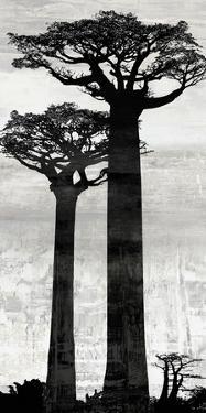 Manakara - Dawn by Tania Bello