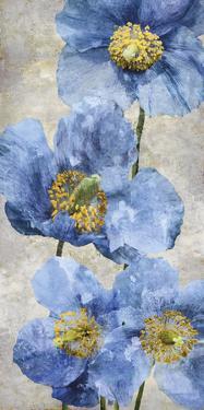 Poppy Splendour I by Tania Bello