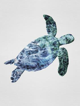 Turquoise Turtle by Tania Bello