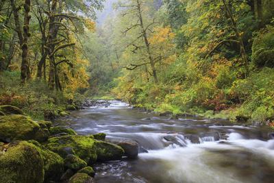 https://imgc.allpostersimages.com/img/posters/tanner-creek-columbia-river-gorge-oregon-usa_u-L-PN70VM0.jpg?p=0
