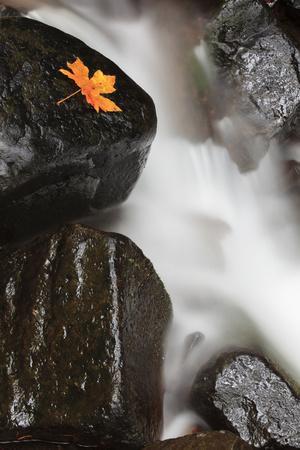 https://imgc.allpostersimages.com/img/posters/tanner-creek-columbia-river-gorge-oregon-usa_u-L-PN70XA0.jpg?p=0