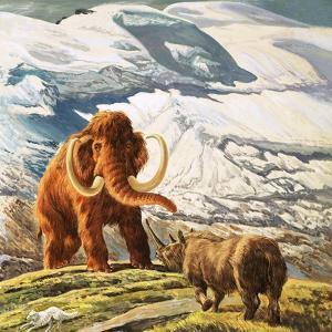 Mammoth Meets Rhinocerous by Tansley