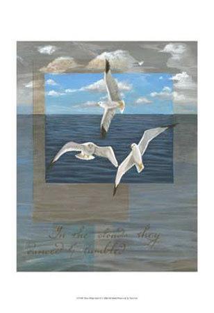 Three White Gulls II