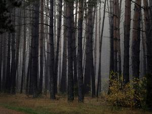 Beautiful Morning in the Misty Autumn Forest by Taras Lesiv