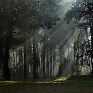 Misty Autumn Forest with Pine Trees by Taras Lesiv