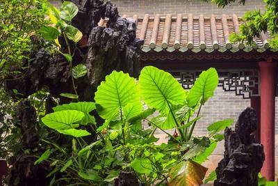https://imgc.allpostersimages.com/img/posters/taro-plant-foshan-ancestral-temple-foshan-china_u-L-Q12T5F70.jpg?p=0