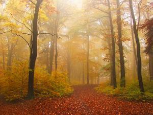 Autumn Foggy Forest by tas10