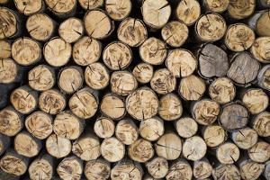 Fire Wood, Log, Billet by tatomm