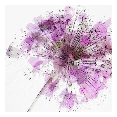 Modern Lilac II