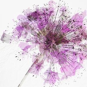 Modern Lilac II by Taylor Greene