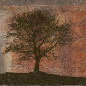 Tree Horizon by Taylor Greene
