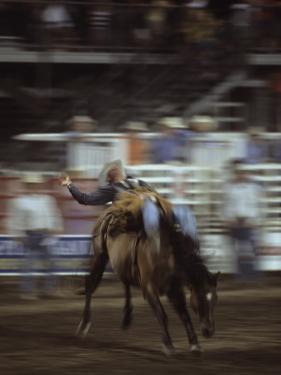 A Cowboy Rides a Bucking Bronco During a Rodeo, Steamboat Springs, Colorado by Taylor S. Kennedy