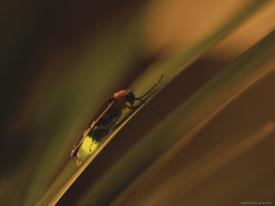Fireflies Photography Posters Prints Paintings Wall Art For Sale Allposters Com