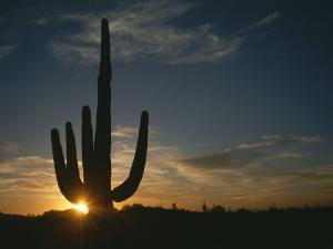 A Saguaro Cactus Silhouetted by the Sunset by Taylor S. Kennedy