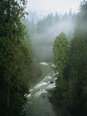 A Salmon Spawning River Runs Through a Temperate Rainforest by Taylor S. Kennedy