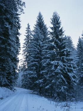 A Snow Covered Road Winding Through the Black Forest by Taylor S. Kennedy