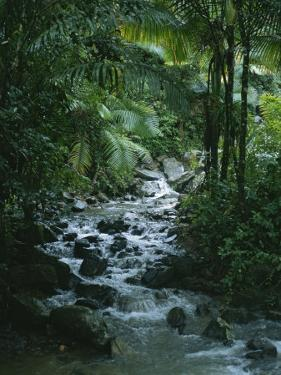 A View of a Tropical Stream in El Yunque, Puerto Rico by Taylor S. Kennedy