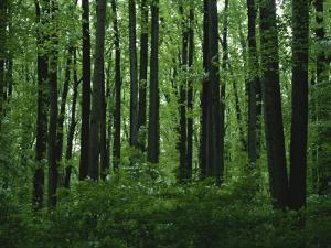 A View of the Forest in Rock Creek Park by Taylor S. Kennedy