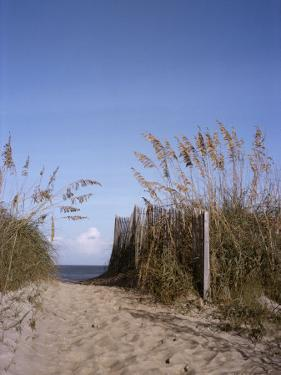 Sea Oats Line the Path to the Beach on the Outer Banks by Taylor S. Kennedy