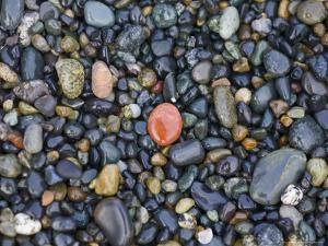 Stones on a Beach Reflect the Light by Taylor S. Kennedy