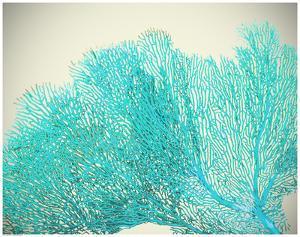 Teal Coral
