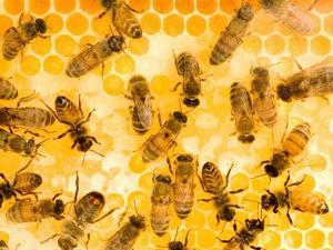 Busy Bees by Ted Horowitz