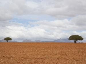 Barren Landscape with Trees by Ted Levine