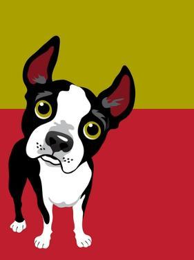 Boston Terrier Dog by TeddyandMia