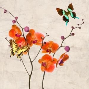 Orchids & Butterflies I by Teo Rizzardi
