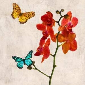 Orchids & Butterflies II by Teo Rizzardi