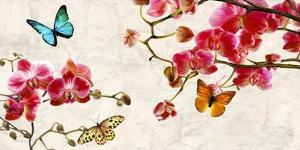 Orchids & Butterflies by Teo Rizzardi
