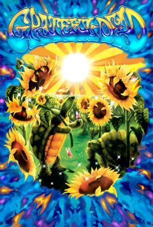 Terrapin Sunflower